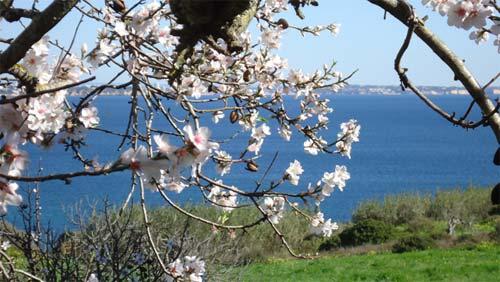 Urlaub an der Algarve zur Mandelblüte